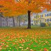 Autumn, River Green