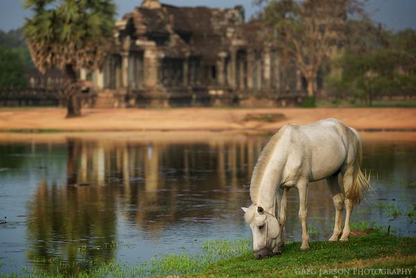 Horse around the grounds of Angkor Way, Cambodia.