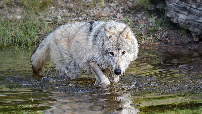 Through My Lens- wildlife photos by Mary Beth Montgomery