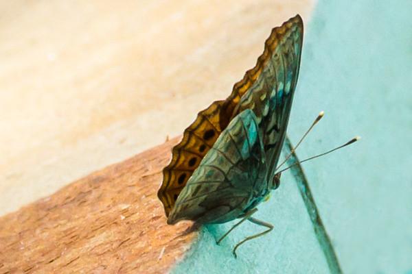 Hello Butterfly!
