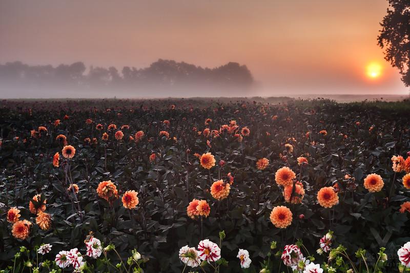 Zeeland, Noord-Brabant