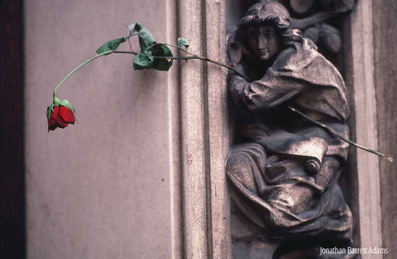 Rose, Lausanne Cathedral, 1982