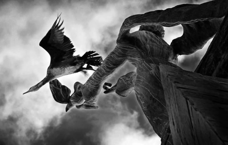 Flight Of The Cormorant