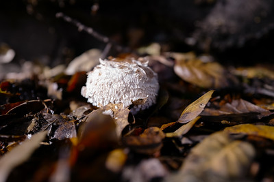 Fungus macro with Leica Q.