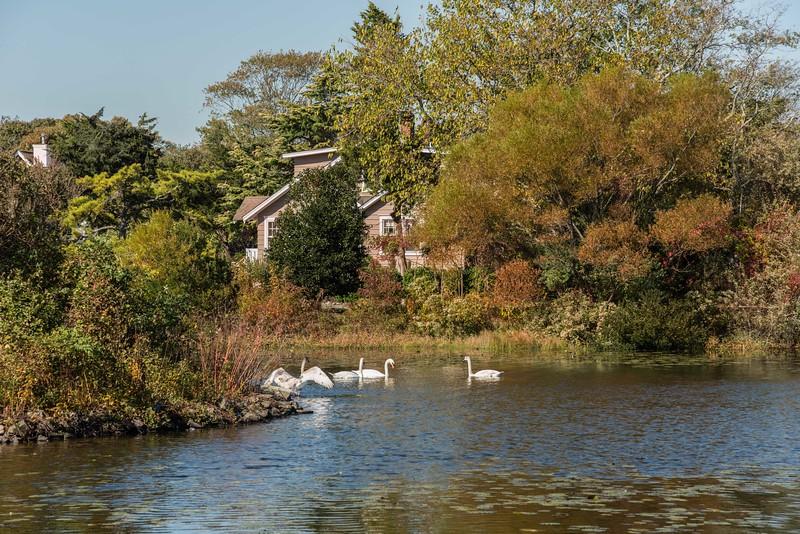 Autumn at Lake Lily