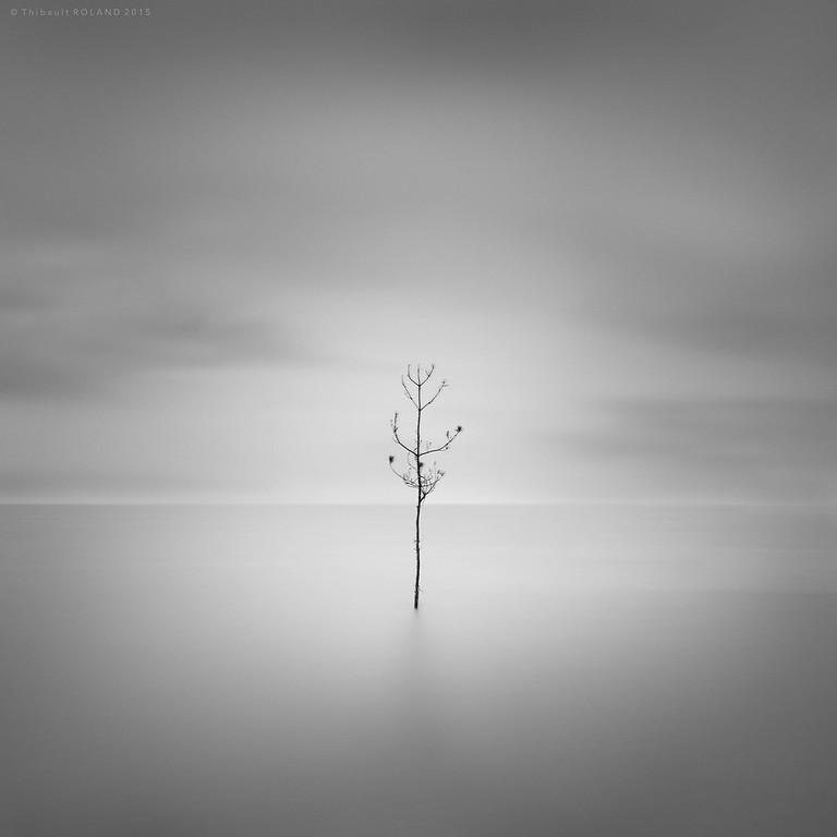 Tree of Life.