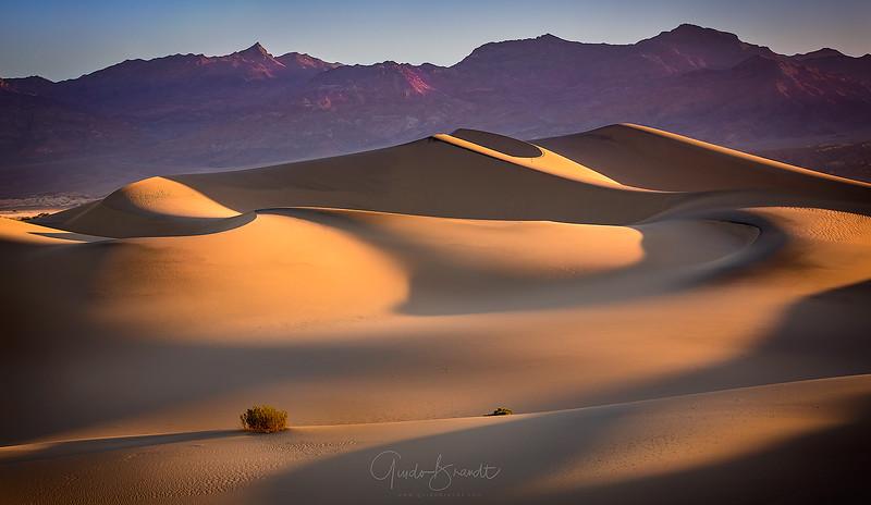 Desert Icecream