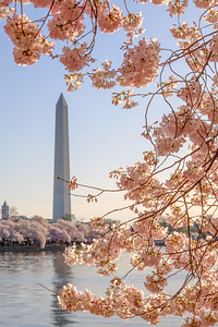 20180408 DC Cherry Blossoms 072