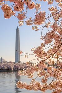 20180408 DC Cherry Blossoms 072