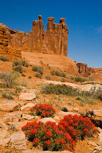 Wildflowers and the Gossips