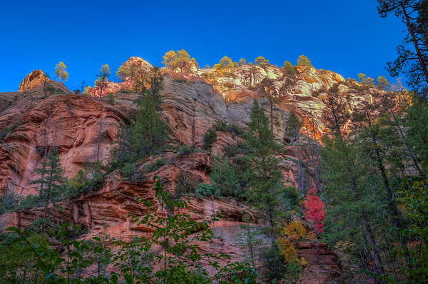 West Fork Canyon Fall Colors, Arizona