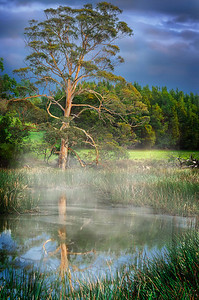 The Oldest Inhabitant - Mowbray Park