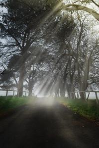 Welcoming Road - Mowbray Park