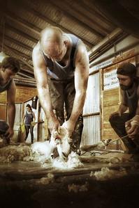 Iconic Aussie Shearer