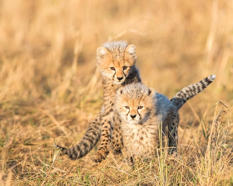 Malaika's cubs