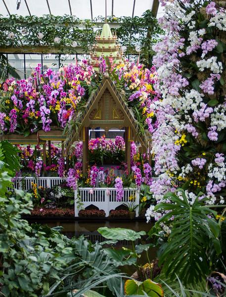 Orchids Festival 2018