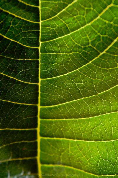 Leaf Detail - IMG#0388
