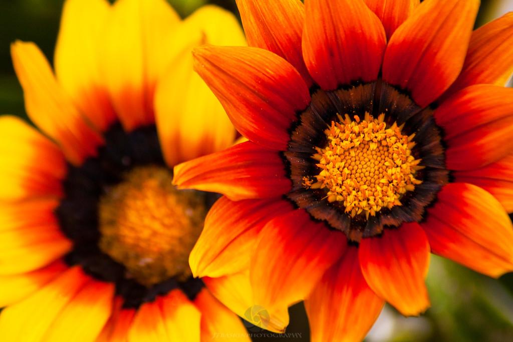 Wildflowers - IMG#1299
