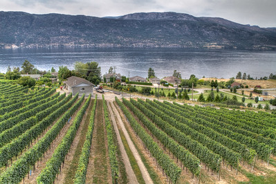 Location: Gray Monk Estate Winery, Kelowna, BC, Canada - http://www.graymonk.com  Description: Taken on August 26, 2012 from the Grapevine restaurant - http://www.grapevinerestaurant.ca/