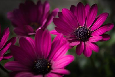 Flower-130531-002