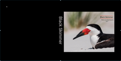 Black Skimmer ZNO book