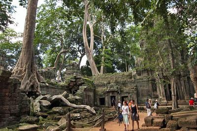 Giant trees dominate Ta Prohm ruins