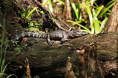Slideshow - Babcock Wilderness Punta Gorda Florida