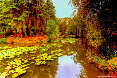 Great Berry Fishing Pond
