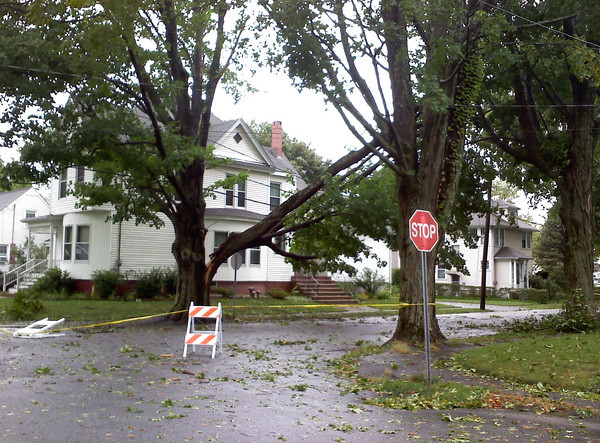 A tree sits on a powerline on Colby Street in Bradford.