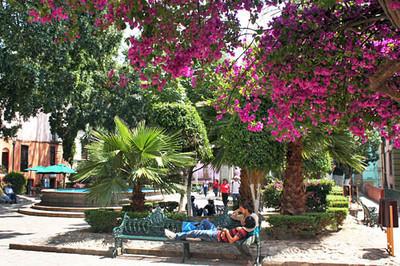 Relaxing in Jardin Reforma