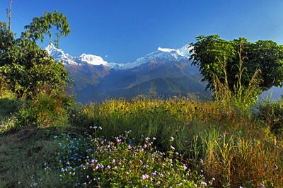 Wildflowers and white peaks