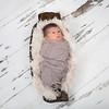 Braxtyn Fox Purdy. 6 days old. 6th February 2014.