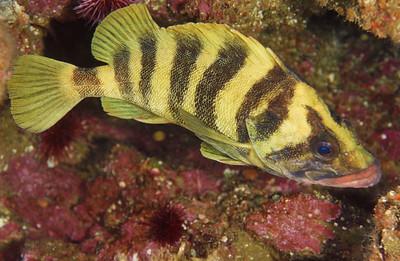 Treefish, San Diego, Ca.
