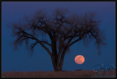 Lone Tree Moon Dance