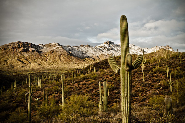 snow on the Tucson Mountains. University of Arizona Desert Station Biological Preserve, Tucson, Arizona USA