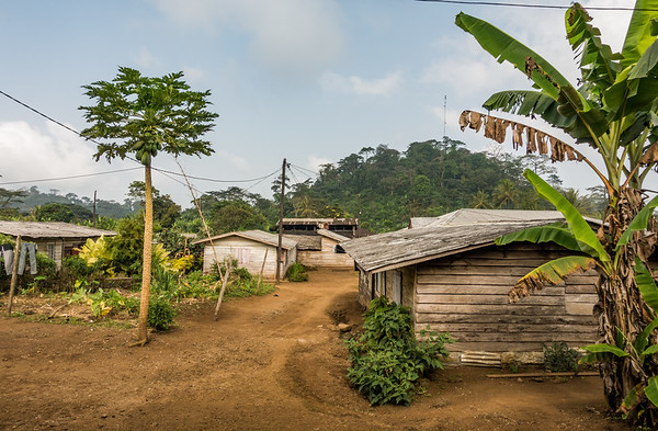 View from old WWF building. Nyasoso, Southwest Region, Cameroon Africa