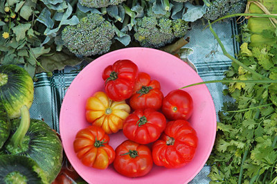 Organic tomatoes tasted better than Heirlooms