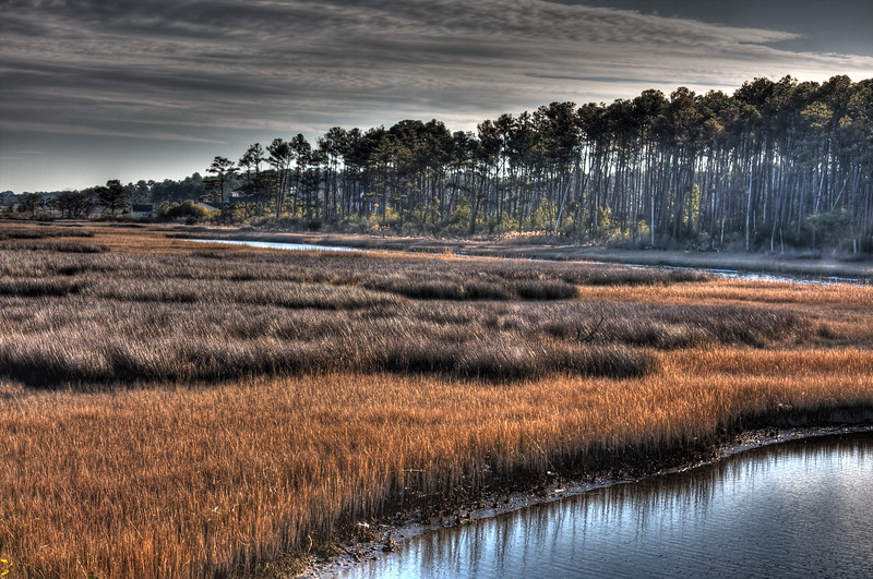 Tidal Marsh and Pines
