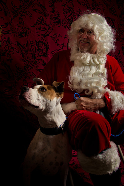 """ROCCO"" the World Famous Boing Boing Dog <a href=""http://boingboing.net/2012/12/13/santa-and-an-adoptable-dog.html?utm_source=feedburner&utm_medium=feed&utm_campaign=Feed%3A"">http://boingboing.net/2012/12/13/santa-and-an-adoptable-dog.html?utm_source=feedburner&utm_medium=feed&utm_campaign=Feed%3A</a>+boingboing%2FiBag+%28Boing+Boing%29"