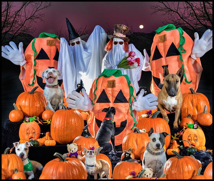 Sgt. Pumpkin's Lonely Pups Club Band