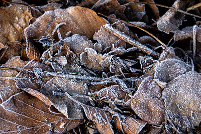 Frost coats the old leaves littering the ground