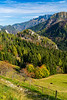 Cattle grazing in Logarska Dolina of the Kamnik Alps, Slovenia, Europe.