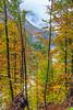 Fall foliage color in the mountains near Log Pod Mangartom, Slovenia, Europe.