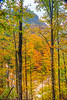 Fall foliage color in the trees in Triglav National Park, Slovenia, Europe.