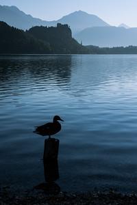 Ráno u Bledského jezera