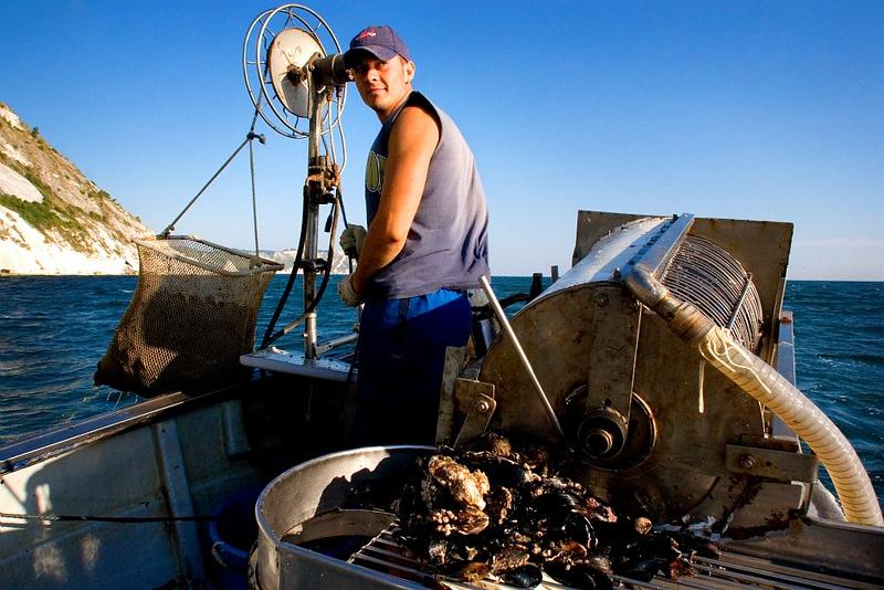 Mosciolo selvatico di Portonovo | Portonovo Wild Mussel