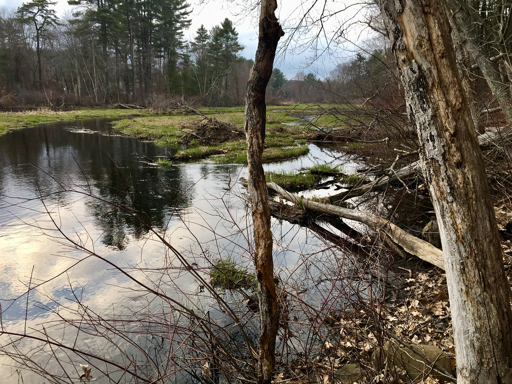 . The late afternoon was still and peaceful on this April day in Billerica. Photo by Mary Leach