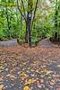 Central Park Fork