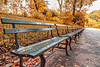 Central Park Fall Benches