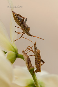 Assassin bug confrontation.